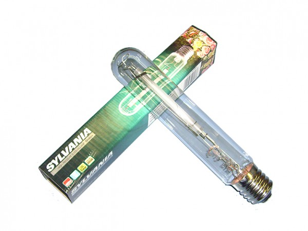Sylvania - 600 Watt Grolux - Blüte